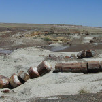 B8 Petrified Forest